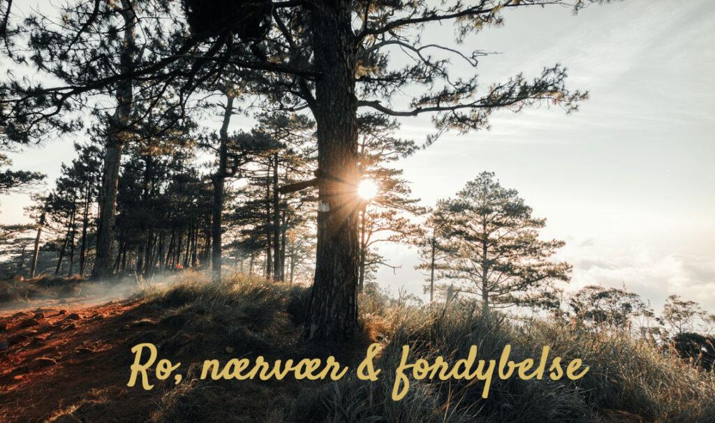 Healing meditation forløb online